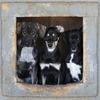 <b>Dogs3.jpg</b>