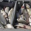 <b>Fishing6.jpg</b>
