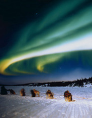 Aurora viewing by dog team