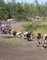 Beck's kennels tour and dog mushing