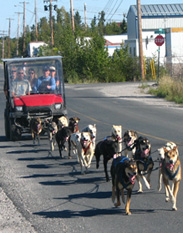 Dog mushing on wheels
